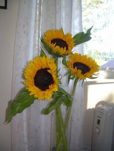 Nydelige solsikker fra Liljan