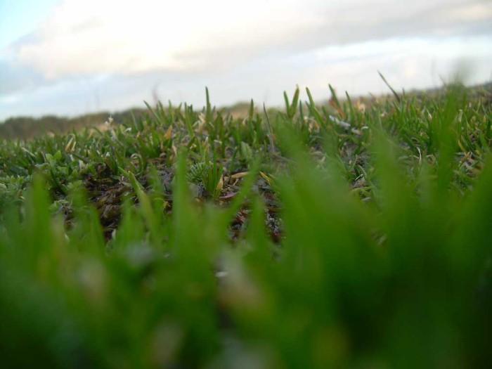 Dette er gress :-)